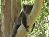 Yanchep National Park & Mindarie