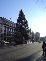 O'Connell Street Christmas tree...
